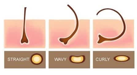 budowa włosa wyjaśnia dlaczego włosy się kręcą