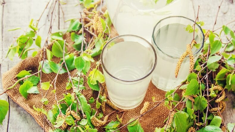 woda brzozowa, sok brzozowy